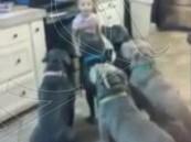 """بالفيديو.. فتاة تجبر 6 كلاب على اتباع """"آداب الطعام"""""""