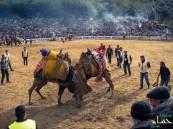 بالفيديو… الأتراك يُقيمون مهرجان لمصارعة الإبل