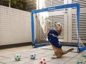 بالفيديو… كلب يتقمص دور حارس المرمى ويصد 26 ركلة جزاء بأعجوبة