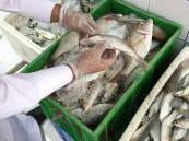 بالصور… غلق وإنذار 18 محلاً لبيع الأسماك بالهفوف ومصادرة 64كج سمك فاسد