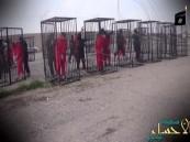"""بالصور: """"أقفاص حيوانات"""" عقوبة تنظيم داعش لـ""""المدخنين"""" بالرقة"""