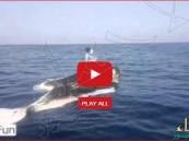"""بالفيديو… سعودي يصطاد السمك واقفًا فوق ظهر """"حوت"""" بالخليج العربي"""