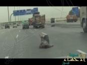 بالفيديو … مريض نفسي يتوسط طريق الظهران الجبيل السريع