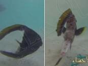 شاهد بالفيديو… أغرب سمكة تسبح ورأسها مفصول عن جسمها