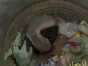 بالفيديو… ضرمبول يُشن هجومًا شرسًا على مواطن قام بتصويره