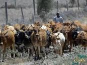 حادث لسرقة ماشية بشمال كينيا يُخلف 75 قتيلا