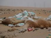 """بالصور… في الأحساء """"ميدان الجزيرة"""" والكارثة المرتقبة"""