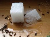 في فصل الصيف… طرق منزلية بسيطة للتخلص من النمل
