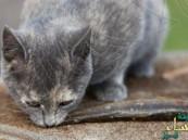 قطة تنقذ جنوداً مصريين من الاغتيال بالسم