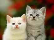 دراسة: مشاهدة مقاطع فيديو عن القطط تزيد الطاقة والمشاعر الإيجابية