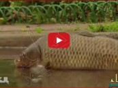 بالفيديو… أسماك حية تتجول بشوارع ولاية نيو جيرسي الأمريكية