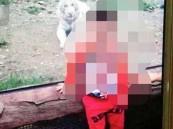 بالفيديو والصور.. نمر يأكل ذراع طفل عمره عامين في حديقة حيوان