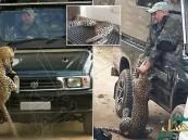 بالفيديو والصور.. فهد يهاجم مرشدًا سياحيًا بجنوب أفريقيا