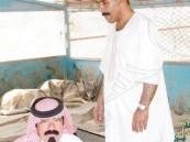 سعودي يعتني بـ10 ذئاب في منزله !