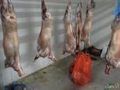 """ضبط مسلخ """"عشوائي"""" في مزارع #الأحساء.. و إزالة مباسط الجائلين بالأسواق"""