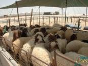 """زراعة #الشرقية تكشف حقيقة استيراد لحوم """"سورية"""" مصابة بالأمراض"""