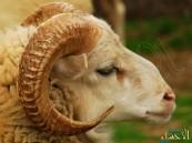بالفيديو.. هذه أسرع طريقة لتقطيع لحوم الخراف في ثوانٍ