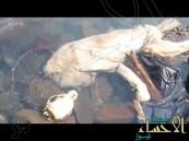 بالفيديو.. العثور على جثة كائن غريب.. والأهالي يؤكدون أنه مصاص دماء !!