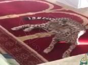"""بالفيديو.. """"فهد"""" يقتحم أحد المساجد في """"بريدة"""".. والجهات الأمنية تتعامل"""