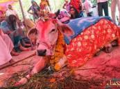دعوات لمنع أكل لحوم الأبقار قد تنتهي بأزمة طائفية في الهند !