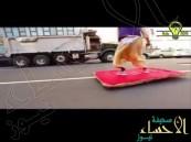 """بالفيديو.. علاء الدين والسجادة السحرية في شوارع """"نيويورك"""" !!"""