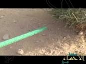 بالفيديو..سعودي تخصص في اكتشاف نوعاً من الثعابين يتخفى تحت رمال البراري