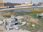 بالصور.. مستنقع ملوث يثير اشمئزاز الأهالي.. ومطالبات بتفعيل دور الجهات
