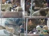 بالفيديو.. أسد يهاجم حارسه ولبؤة تنقذه من بين أنيابه