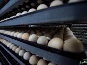 """""""الغذاء والدواء"""" تحظر استيراد لحوم الدواجن وبيض المائدة من 5 مناطق فرنسية"""