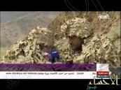 بالفيديو.. هذه براعة القناصة السعوديين في اصطياد المتسللين