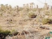 تجزئة الأراضي الزراعية تقضي على أزمة الصكوك