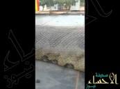 بالفيديو … شاهد عمال يعثرون على أضخم ثعبان في العالم