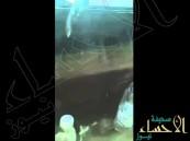 بالفيديو … شاهد إبل سائبة تتسبب بوقوع حادث سير
