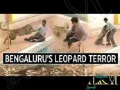 """بالفيديو … """"نمر"""" يهاجم مدرسة في الهند"""