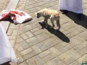 القبض على باكستاني حاول تهريب كلب لذبحه بمطعم