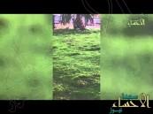 """بالفيديو … شاهد ماذا قال """"مواطن"""" بعد زيارته لمنتزه في #الأحساء"""
