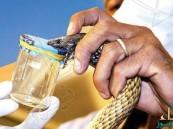 """""""الأمصال"""" يكشف حقيقة شركات المبيدات لمكافحة العقارب والثعابين !"""