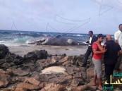 """بالفيديو.. حوت """"عملاق"""" يفاجئ المواطنين على أحد الشواطئ المصرية !"""