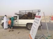 """بالصور.. حظر دخول """"مركبات الأبقار """" إلى سوق الأنعام المركزي بالأحساء"""