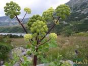 4 أعشاب تُخلص الجسم من السموم والسوائل الزائدة