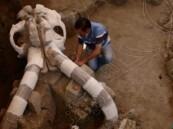 بالصور.. العثور على هيكل عظمي هائل لحيوان الماموث عاش قبل 14 ألف سنة