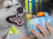 كشف تفاصيل وفاة طفل في الجوف بسبب عضة كلب