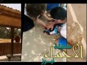 بالفيديو: فيل يقتل طفلة بحجر