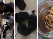 توقيف راكب سعودي أخفى 10 أفاعي سامة ببنطاله