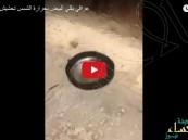 شاهد.. عراقي يقلي البيض على حرارة الشمس الحارقة !