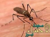 ولاية فلوريدا: تسجيل أول حالة إصابة بفيروس زيكا