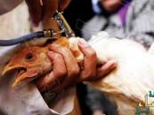 """#أمريكا .. اكتشاف سلالة مدمرة من """"انفلونزا الطيور"""""""