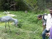 شاهد .. طائر مؤدب يرد التحية على الطريقة اليابانية !!