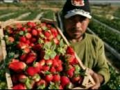 الغذاء والدواء: توضح حقيقة فايروسات الفراولة المجمدة المصرية