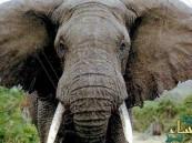 """قصة الصورة التي قتلت صاحبها.. فيل يدهس """"أحد معجبيه"""""""